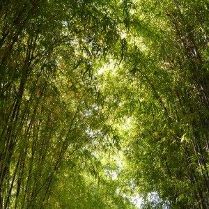 Øvrige bambusprodukter
