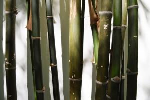 bambus-planter-bambusbiksen